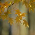 写真: 秋景11