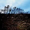 写真: 野反湖4