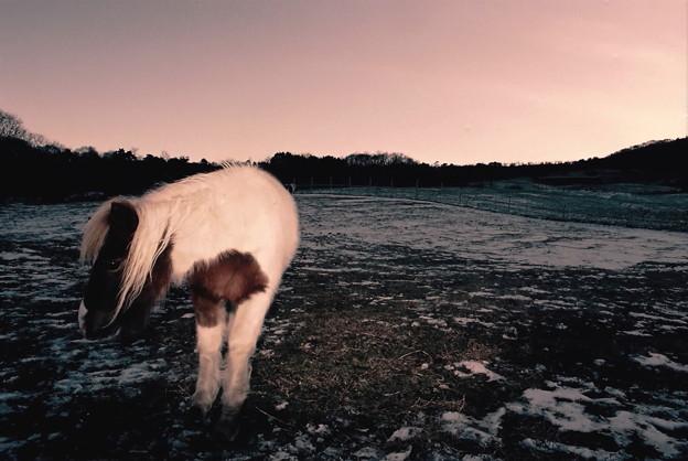 夜明けの牧場