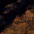 写真: 夕陽を浴びて