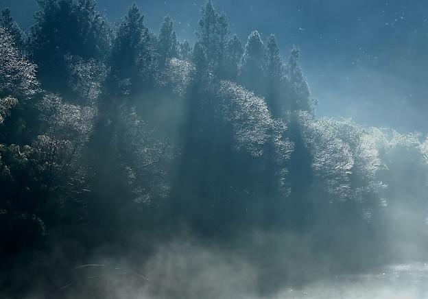 Photos: 冬の光