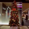 写真: 渋谷マークシティ クリスマスワンダーランド