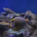 Photos: マンドリルみたいな魚