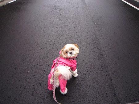 道路が濡れてます。