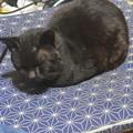 黒猫のぽん吉です。