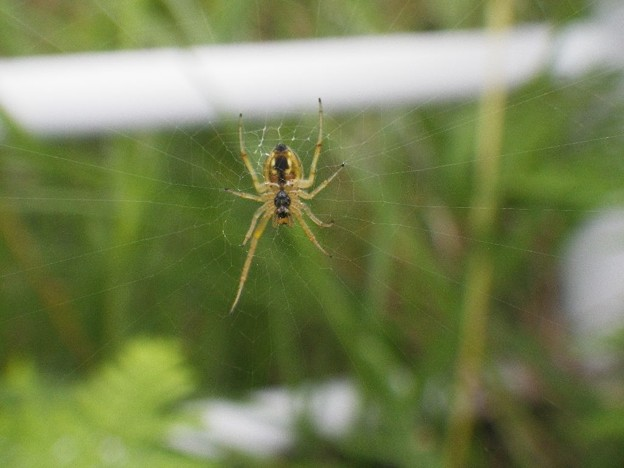 写真: 蜘蛛