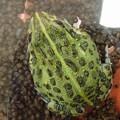 写真: 蛙 3