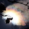 写真: IMG_0823_彩雲