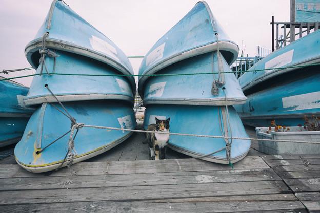 ボートとにゃーん