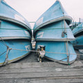 写真: ボートとにゃーん