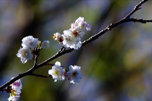 141203 徳川園 - 009
