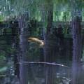 写真: 秋を泳ぐ