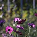 Photos: 花壇の向うは・・・