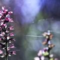 写真: 秋の糸電話