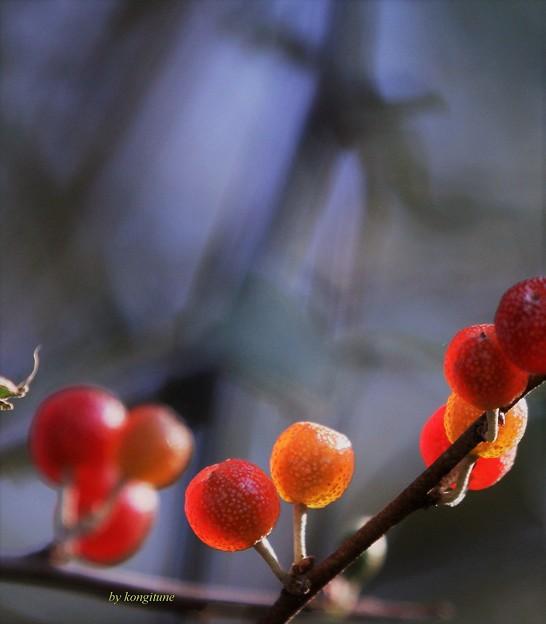 写真: 秋のロリポップ