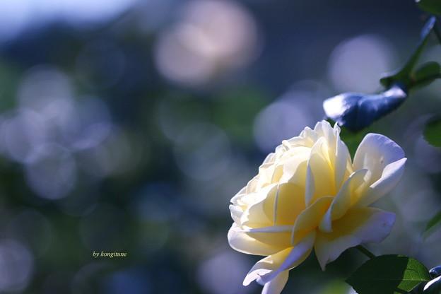 写真: 恋心