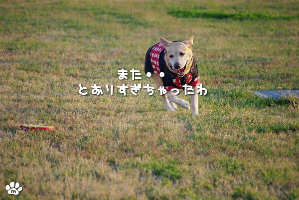 s-myu2009_1108(170)