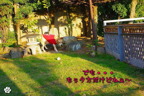 s-myu2009_1125(003)