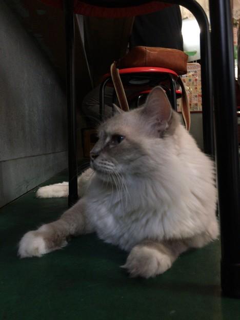 2017/10/08 猫の居る居酒屋「おる商店」