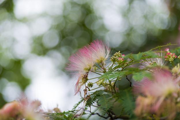 写真: 梢の妖精