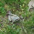 4月22日「蛙」