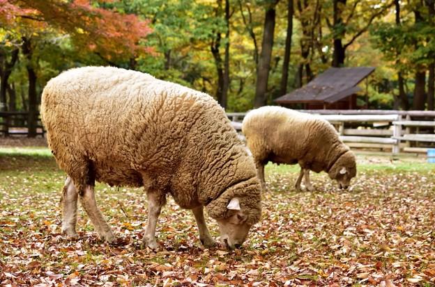 干支は、羊~っ!