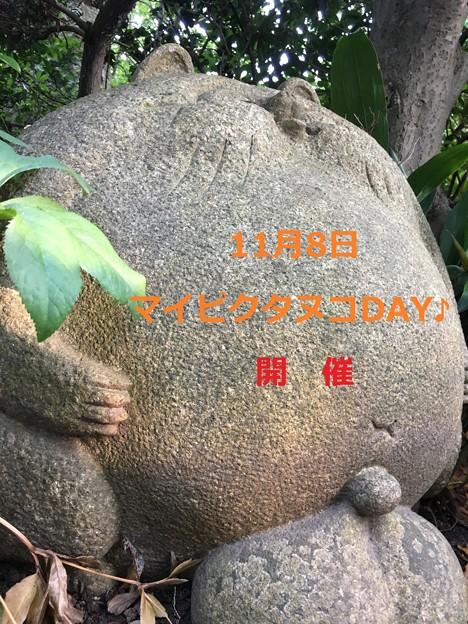 11/8マイピクタヌコDAY♪