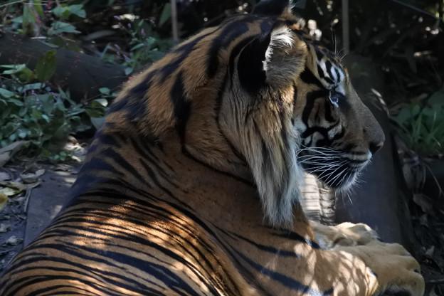 20171018上野動物園NO.2