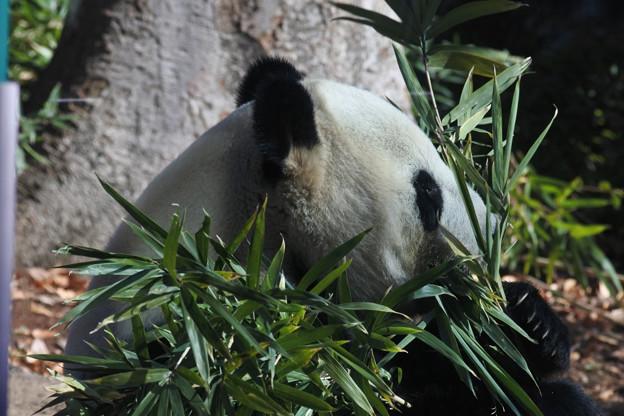 20171213上野動物園NO.4