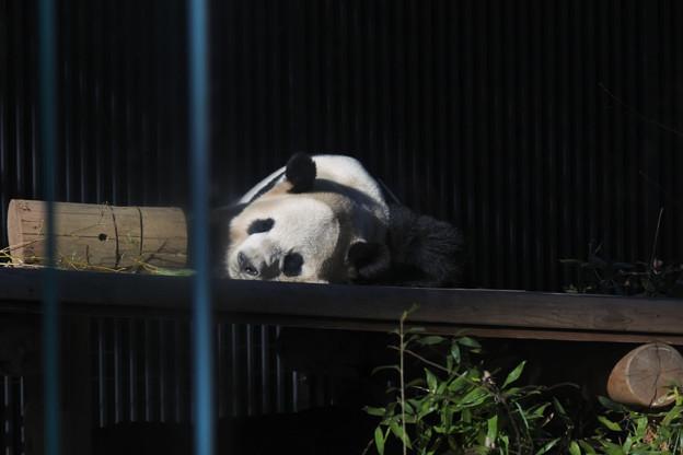 20171213上野動物園NO.8