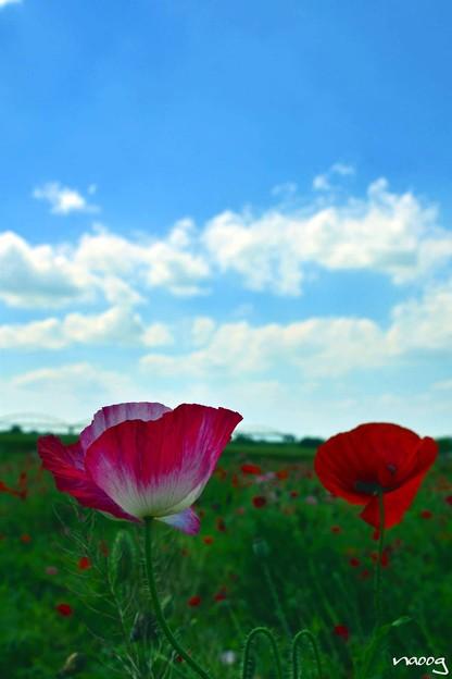 写真: sunny day