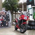 写真: タヌキ忍者とNinja