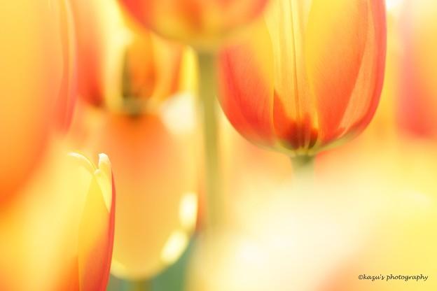 写真: 春真っ盛り♪