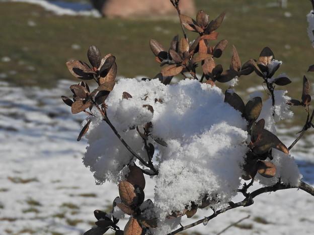 雪が重い・・・