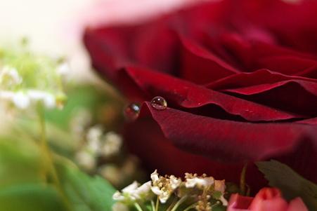 薔薇と雫(2)