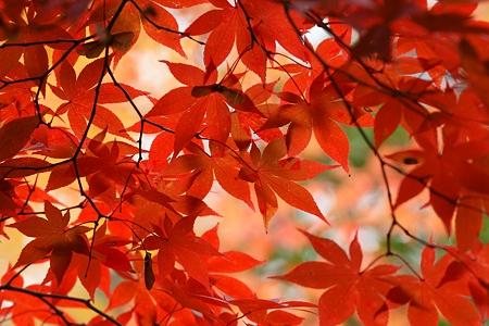 見上げた秋