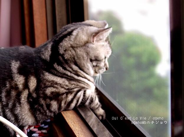 寒いから窓閉めさせて…。 ( ー´дー` )