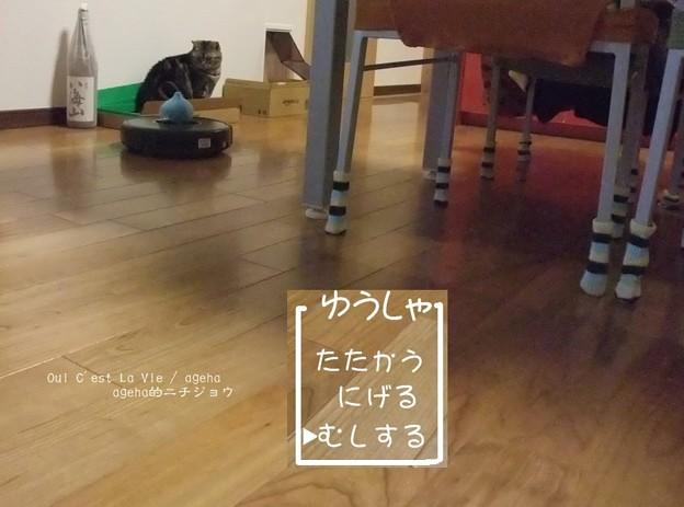Photos: 猫とルンバとスライムと4