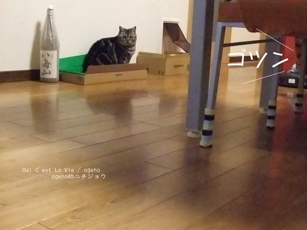 Photos: 猫とルンバとスライムと6