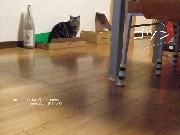 猫とルンバとスライムと6