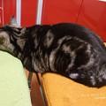 Photos: 帰宅したらツチノコが寝ていた。