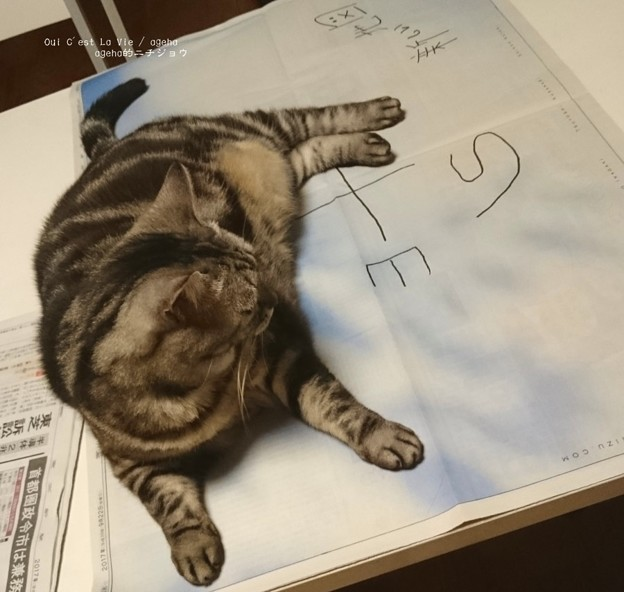 Sがヒモに見えた猫。(新しい地図)
