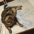 写真: Sがヒモに見えた猫。(新しい地図)