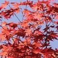 写真: 紅い新芽に小さな花