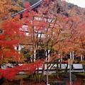 写真: 京都・永観堂