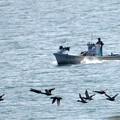 写真: 漁船と鴨