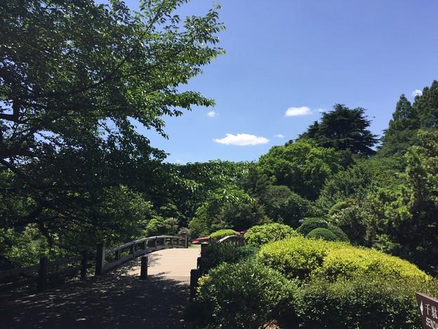 写真: 新宿御苑