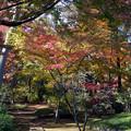 川越 喜多院の紅葉 24