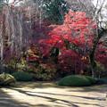 川越 喜多院の紅葉 25