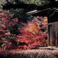 川越 喜多院の紅葉 28